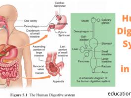 Human Digestive System gk in hindi UKPSC